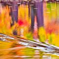 Red Cedar River At Msu Pano  by John McGraw