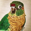 Green Cheeked Conure by Heike Althaus