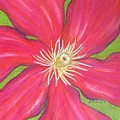 Red Clematis Flower  by Beth Akerman