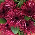 Red Daisies Bouquet by Jeannie Rhode