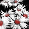 Red Daisy by Heather Joyce Morrill