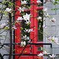 Red Door by Lisa Knechtel
