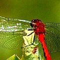 Red Dragon 2 by David Lane