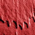 Red Edge by Mark Fuller