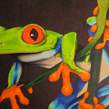Red Eye Tree Frog by Brian Schuster
