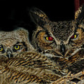 Red Eyed Mama And Baby Horned Owls by Elizabeth Hershkowitz