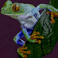 Red Eyed Tree Frog Original Oil Painting 4x6in by Manuel Lopez