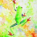 Red Eyed Tree Frog by Corrado Ghioldi