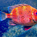 Red Fish Blue Fish by Diana Angstadt