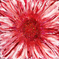 Red Flame by Paul Tokarski