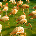 Red Florida Flamingos In Green Water by Peter Potter