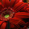 Red Floral by Clayton Bruster