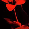 Love For Red Flower #1. by Alexander Vinogradov