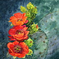 Red Flowering Prickly Pear Cactus by Marilyn Smith