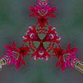 Red Flowers Abstract by James Smullins