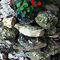 Red Flowers And Rocks by Joanne Coyle