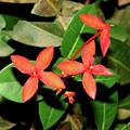 Red Flowers by Brett Winn