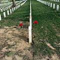 Red Flowers In Arlington by Cora Wandel