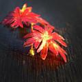 Red Flowers by Rene Larsen