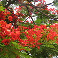 Red Flowers by Utpal Datta