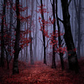 Red Forest 2 by Bekim Art