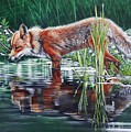 Red Fox Reflecting by John Neeve