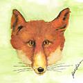 Red Fox by Judith Lindenau