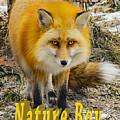 Red Fox Nature Boy by LeeAnn McLaneGoetz McLaneGoetzStudioLLCcom