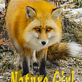 Red Fox Nature Girl by LeeAnn McLaneGoetz McLaneGoetzStudioLLCcom
