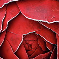 Red Frosty Metal Rose by Stefania Levi