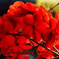 Red Geranium Anniversary Greeting by Joan-Violet Stretch