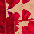 Red Geranium Fragments by Judi and Don Hall