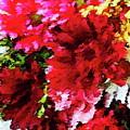Red Gerbera Daisy Abstract by Dana Roper