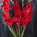 Red Gladiolus In Striped Vase by Garry Gay
