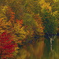 Red Gold And Green by Edward Kreis