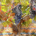 Red Grapes On The Vine During The Fall Season by Brandon Bourdages