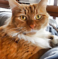 Red-haired Kitten by Jeelan Clark