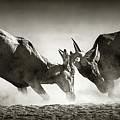 Red Hartebeest Dual In Dust by Johan Swanepoel