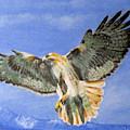 Red Hawk, 11x14, Oil, '07 by Lac Buffamonti