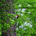 Red Headed Beauty by Lisa Wooten