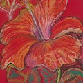 Red Hibiscus #1 by Margo Christie