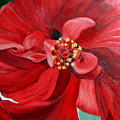 Red Hibiscus by Cynthia Blair