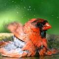 Red Hot Bath by David Taylor