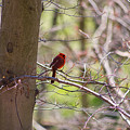 Red In The Forest by Rima Biswas