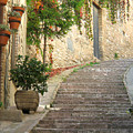 Red Ivy And Steps In Assisi Italy by Greg Matchick