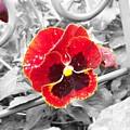 Red by Jessica Burgett