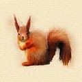 Red Squirrel by John Edwards