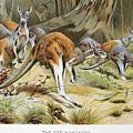Red Kangaroo by Granger
