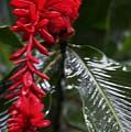 Red Lava Flower by Daniel Shearer