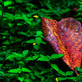 Red Leaf  by Totto Ponce